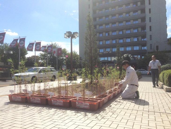 宇都宮市役所前にも設置されたコスモス