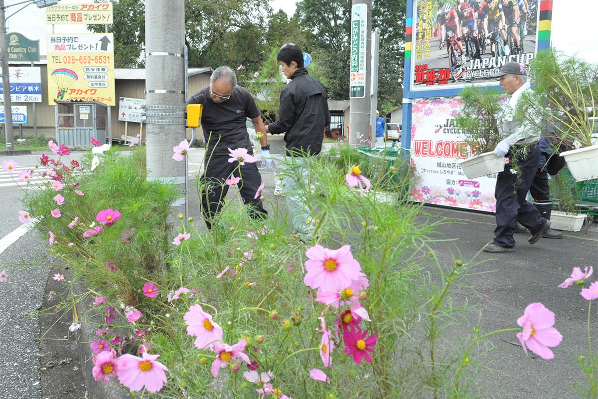 選手が疾走する田野町交差点に飾られたコスモス